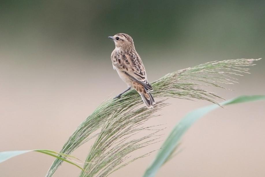 Птицы на хакасском языке