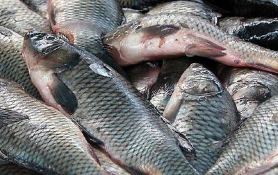 Рыбы на хакасском языке