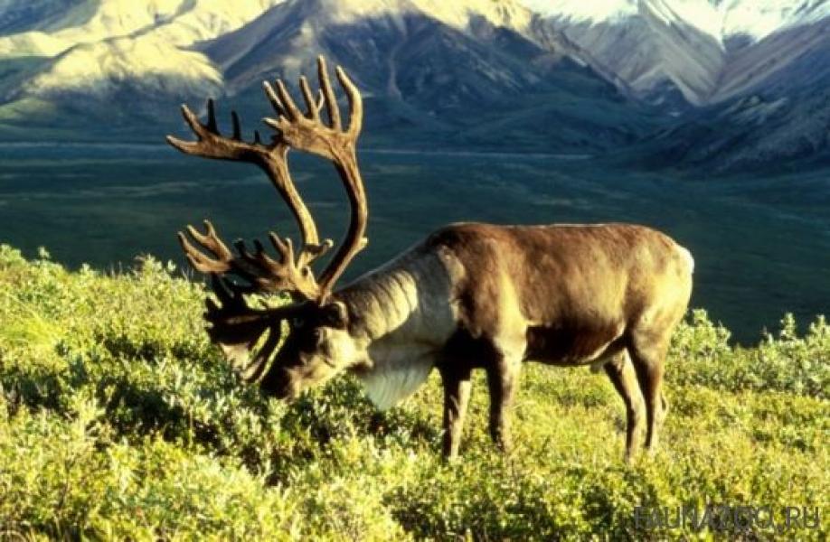 Животные на хакасском языке
